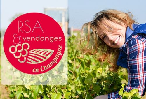 RSA et vendanges en Champagne, le dispositif évolue
