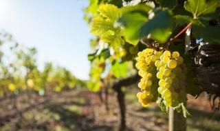 Valorisation culturelle du champagne : des bourses pour financer la recherche