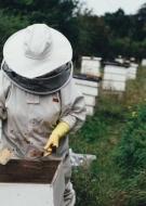Les Rendez-vous en Champagne de l\'Office de Tourisme - Visite de la miellerie et du rucher Hatier & Fils à Hautvillers