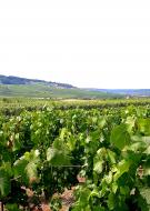 Vendangeur d\'un jour : Champagne Jean Claude Vallois