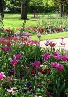 Promenade commentée au Jardin d\'horticulture-Pierre Schneiter