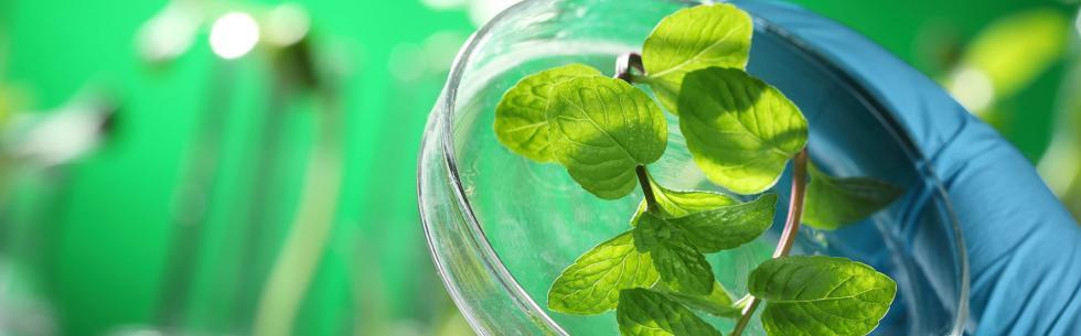 Agro-ressources et bioéconomie, un signal pour l\'avenir